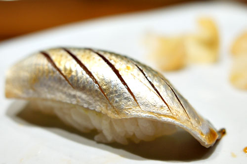 Gizzard Shad / Kohada
