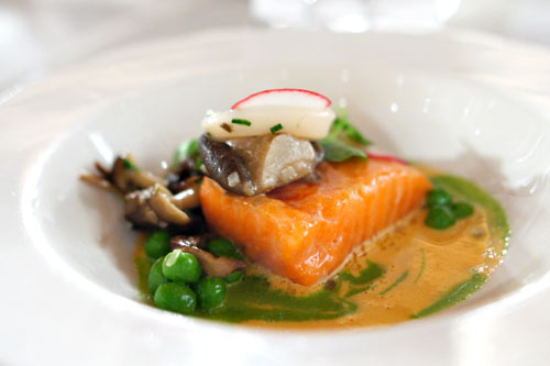 Ocean Trout