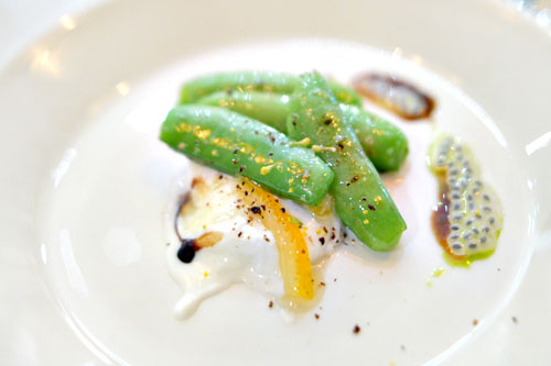 snap pea with burrata, meyer lemon, cucumber leaf