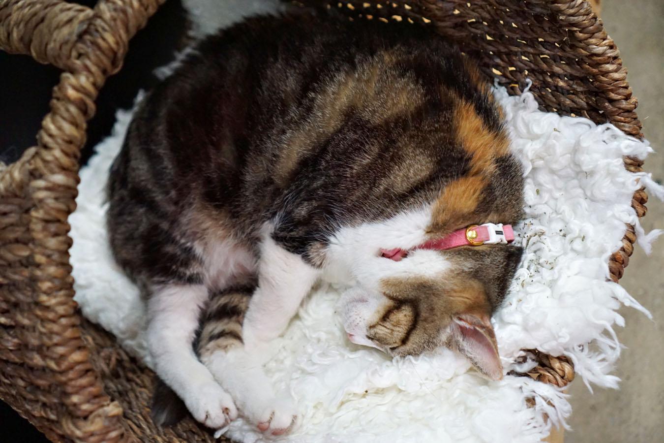 Cat curled up