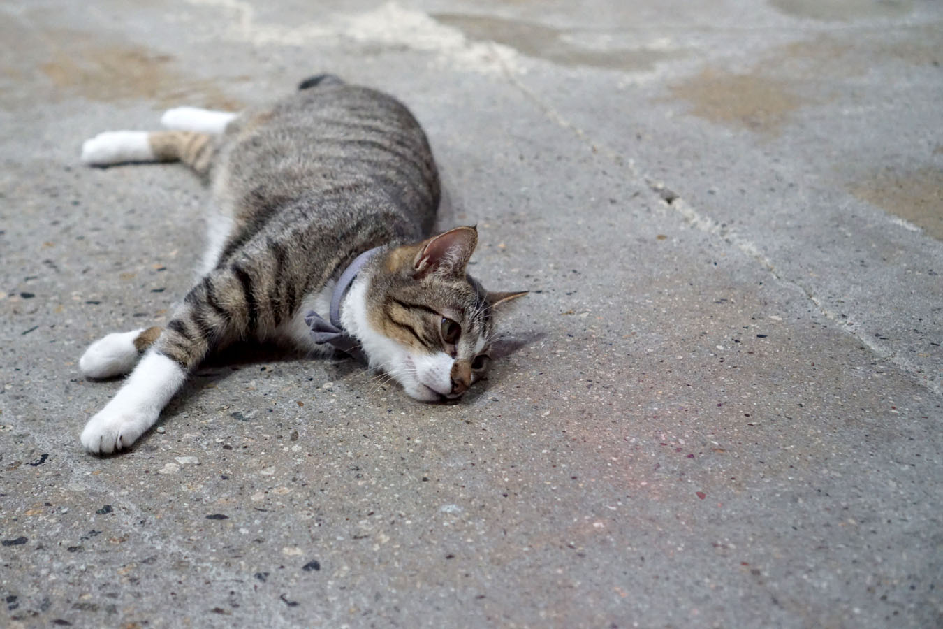 Cat sprawled out on the concrete floor