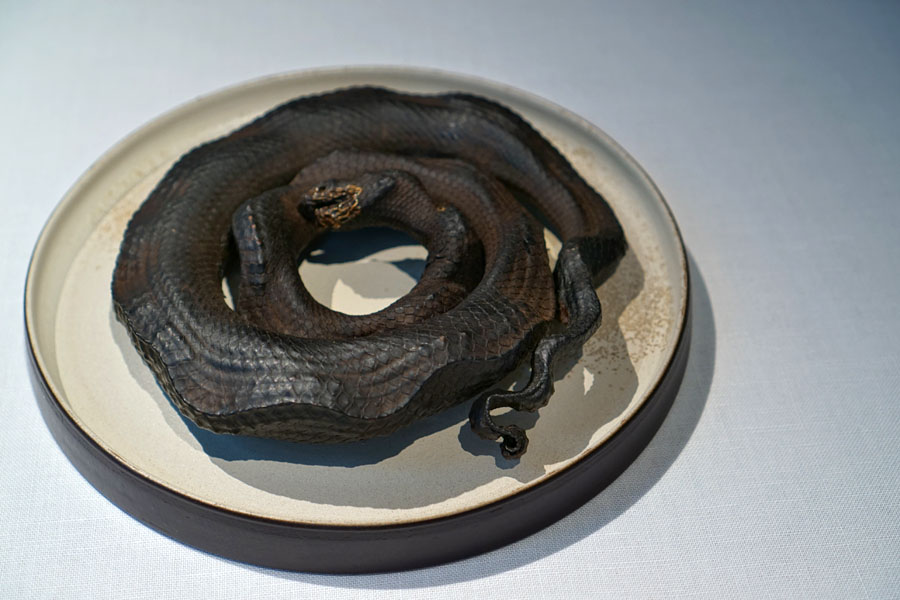 Petrified Sea Snake