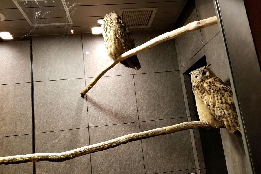 Nihonryori RyuGin Owls
