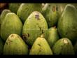Vespertine Cuban Menu: Ensalada de Aguacate