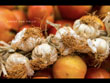 Vespertine Cuban Menu: Arroz con Pollo
